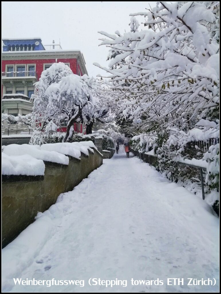 pathway in the snow